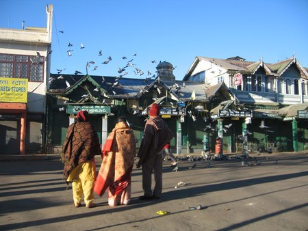 Pigeons at the Mall, Darjeeling
