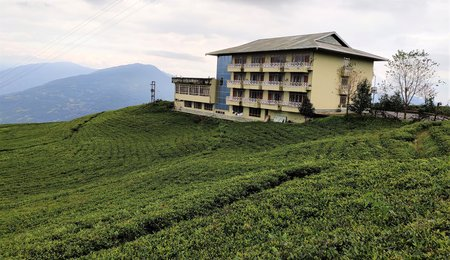 Cherry Resort, Temi Tea Garden