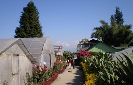 Pineview Nursery, Kalimpong