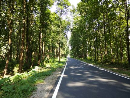 Road through Chapramari forest